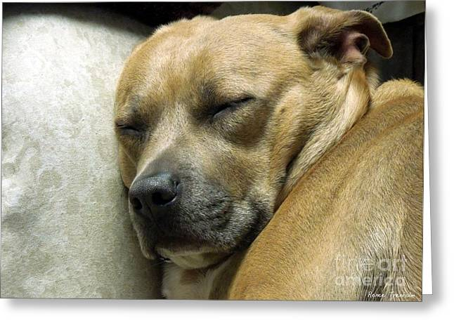 Pit Bull Poster Greeting Cards - All Is Well Greeting Card by Renee Trenholm