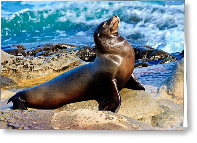California Sea Lions Greeting Cards - All Is Well - Sea Lion Greeting Card by Ben Graham