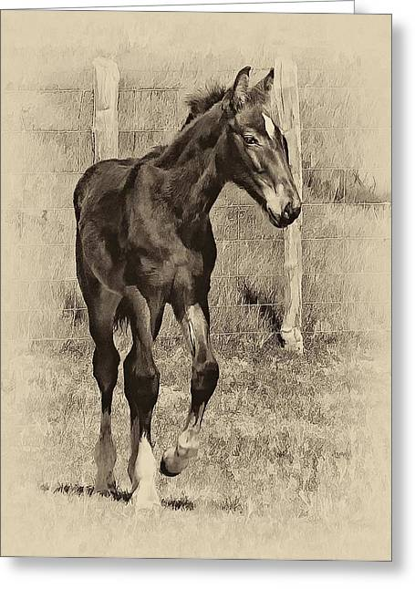 Equestrian Prints Photographs Greeting Cards - All Legs sepia Greeting Card by Steve Harrington
