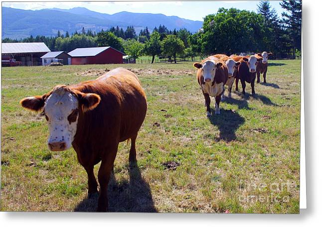 Happy Acres Farm Greeting Cards - All Lined Up Greeting Card by Erin Baxter
