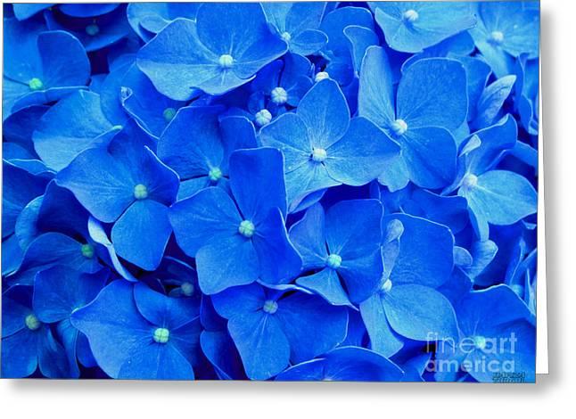 All Summer Beauty - Hydrangea Macrophylla Greeting Card by Hanza Turgul