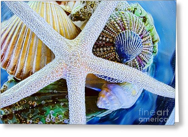 Sea Shell Digital Photographs Greeting Cards - All the Colors of the Sea Greeting Card by Colleen Kammerer