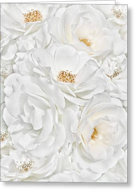 Ivory Flower Greeting Cards - All the White Roses  Greeting Card by Jennie Marie Schell