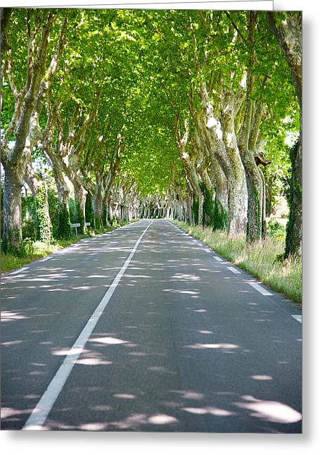 St Remy Greeting Cards - Allee Of Trees, St.-remy-de-provence Greeting Card by Panoramic Images