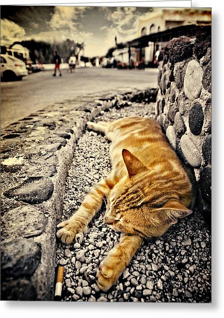 Cat Sleeping Greeting Cards - Alley Cat Siesta In Grunge Greeting Card by Meirion Matthias