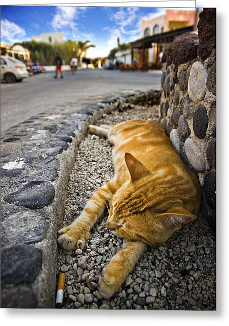 Cat Sleeping Greeting Cards - Alley Cat Siesta Greeting Card by Meirion Matthias
