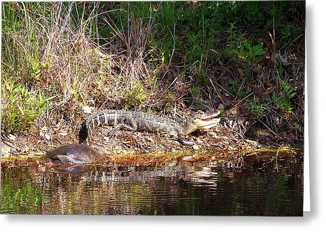 Fine Art Photograph Greeting Cards - Alligator 005  12 March 2013 Greeting Card by Chris Mercer