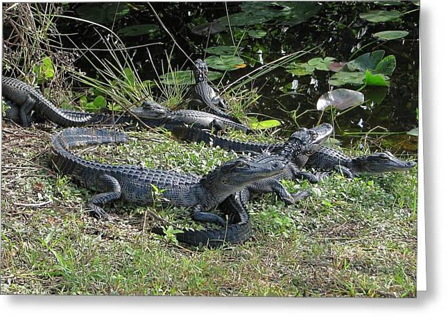 Alligator-33 Greeting Card by Rudy Umans