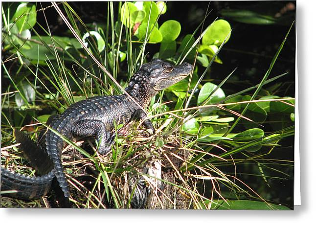 Alligator-5 Greeting Card by Rudy Umans