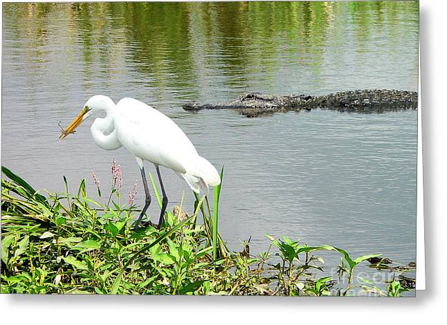 Al Powell Photography Usa Greeting Cards - Alligator Egret and Shrimp Greeting Card by Al Powell Photography USA