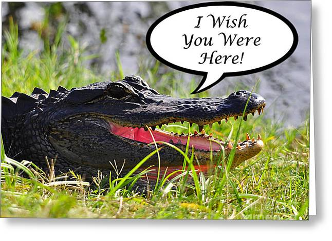 Florida Gators Digital Greeting Cards - Alligator Greeting Card Greeting Card by Al Powell Photography USA