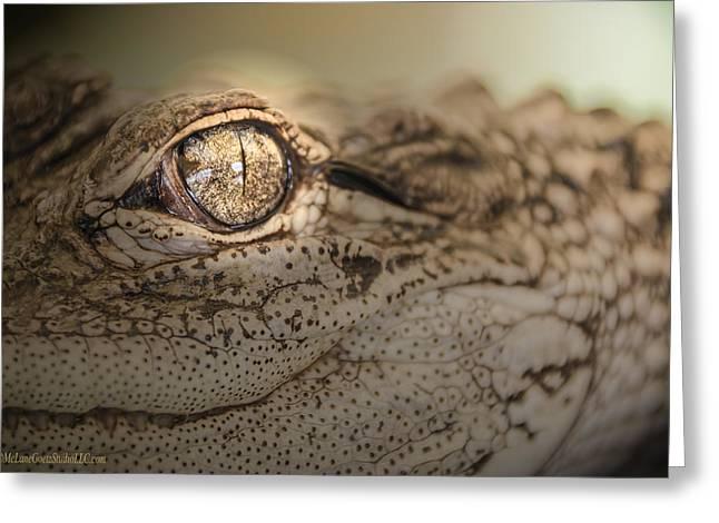 Coldblooded Greeting Cards - Alligator Greeting Card by LeeAnn McLaneGoetz McLaneGoetzStudioLLCcom