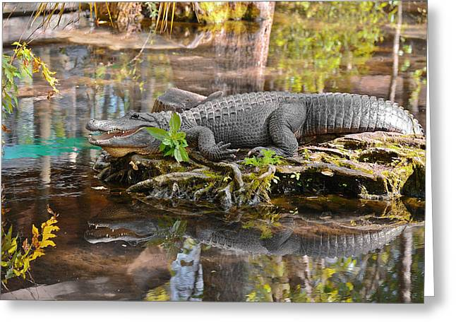 Alligator Mississippiensis Greeting Card by Christine Till