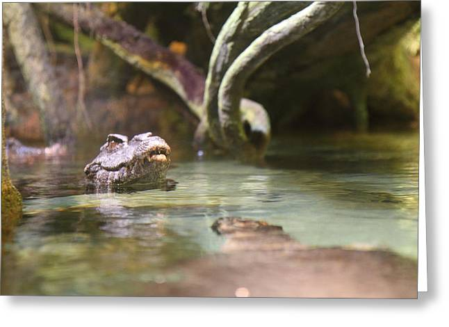 Gator Greeting Cards - Alligator - National Aquarium in Baltimore MD - 12121 Greeting Card by DC Photographer