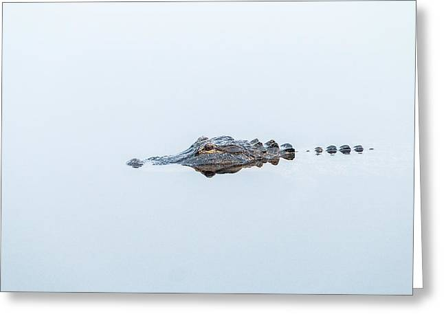 Coldblooded Greeting Cards - Alligator Stealth Greeting Card by Patti Deters