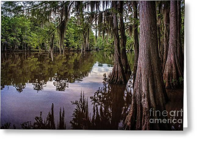 Tamyra Ayles Greeting Cards - Alligator Swamp on Caddo Lake Greeting Card by Tamyra Ayles