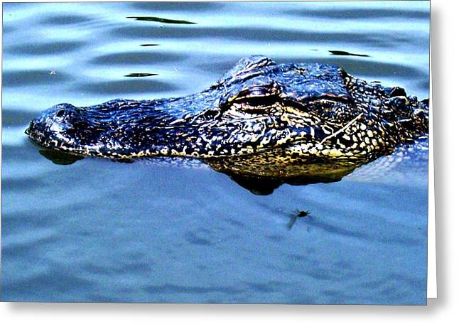 Alligator With Spider Greeting Card by Robin Lewis