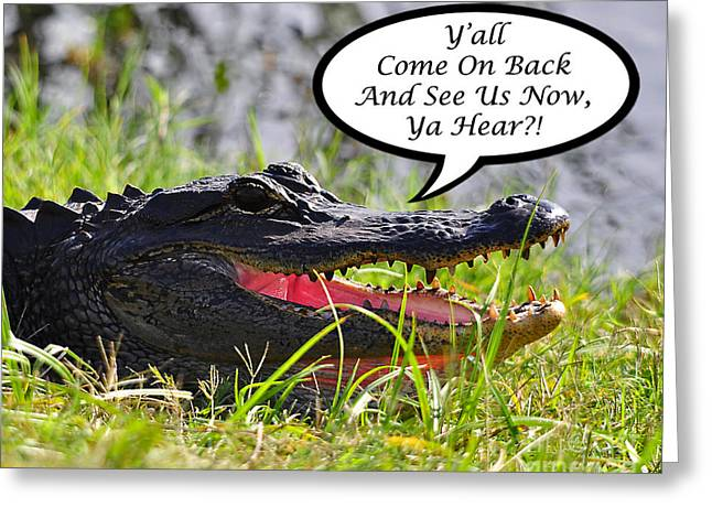 Florida Gators Photographs Greeting Cards - Alligator Yall Come Back Card Greeting Card by Al Powell Photography USA
