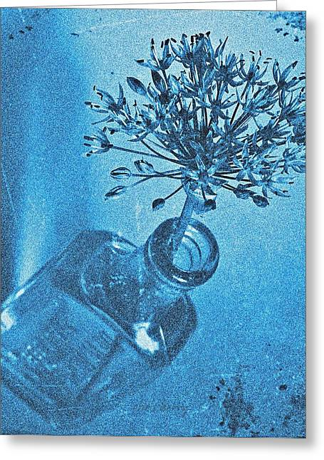 Glass Vase Greeting Cards - Allium Cyanotype Greeting Card by Chris Berry