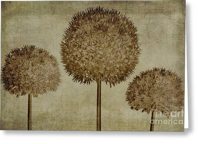 Stamen Greeting Cards - Allium hollandicum sepia textures Greeting Card by John Edwards