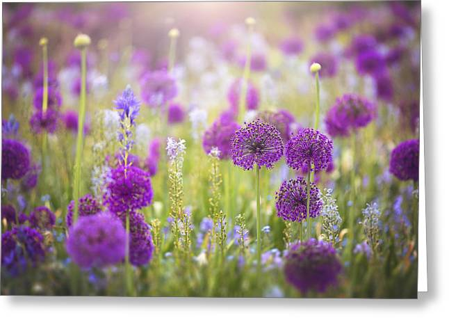 Allium Greeting Card by Kim Zier