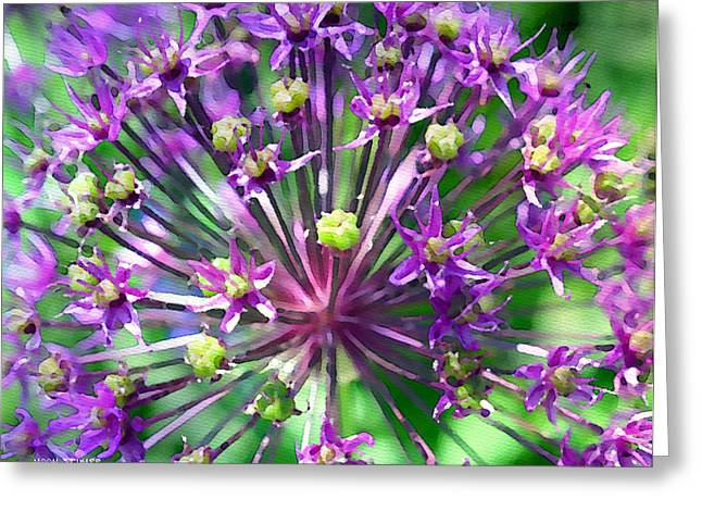 Romantic Floral Greeting Cards - Allium series - Close Up Greeting Card by Moon Stumpp
