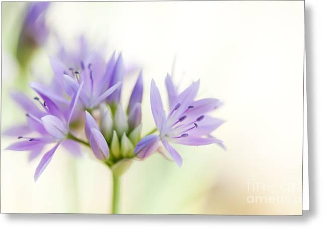 Emerge Greeting Cards - Allium Unifolium Eros Greeting Card by Tim Gainey