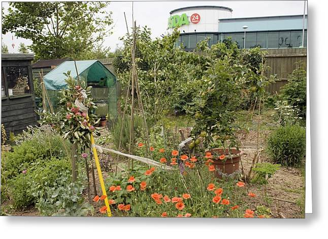 Locally Grown Greeting Cards - Allotment companion flower planting Greeting Card by Science Photo Library