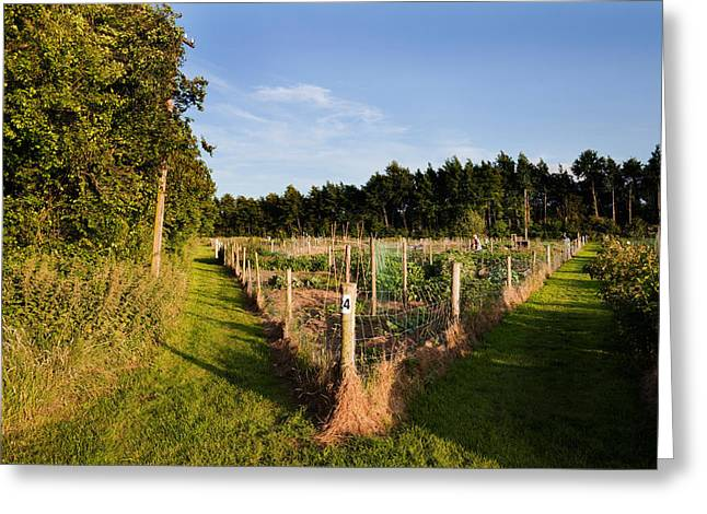 Gardening Photography Greeting Cards - Allotment Near The Wonderful Barn Greeting Card by Panoramic Images