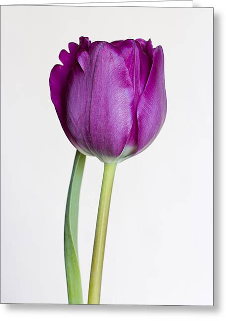 Violet Blue Greeting Cards - Allure Greeting Card by Heidi Smith