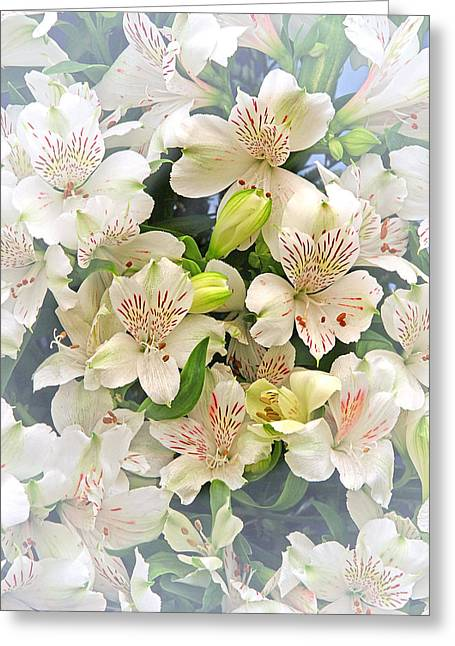 Alstroemeria Greeting Cards - Alluring Alstroemeria - Peruvian Lilies Greeting Card by Gill Billington