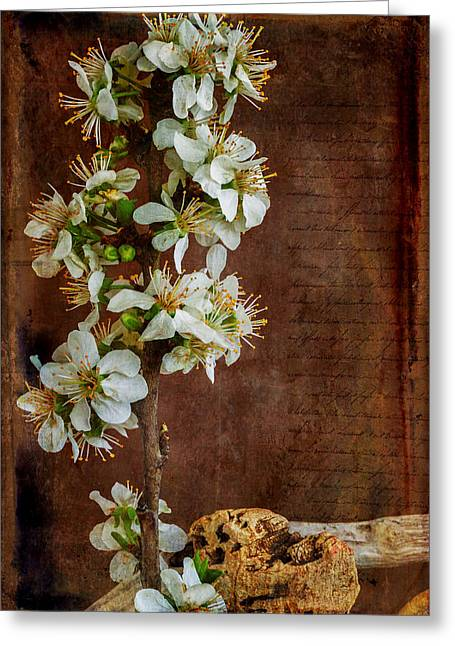 Fruit Tree Photographs Greeting Cards - Almond Blossom Greeting Card by Marco Oliveira