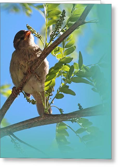 Bird On Tree Greeting Cards - Almond Tart Greeting Card by  The Art Of Marilyn Ridoutt-Greene