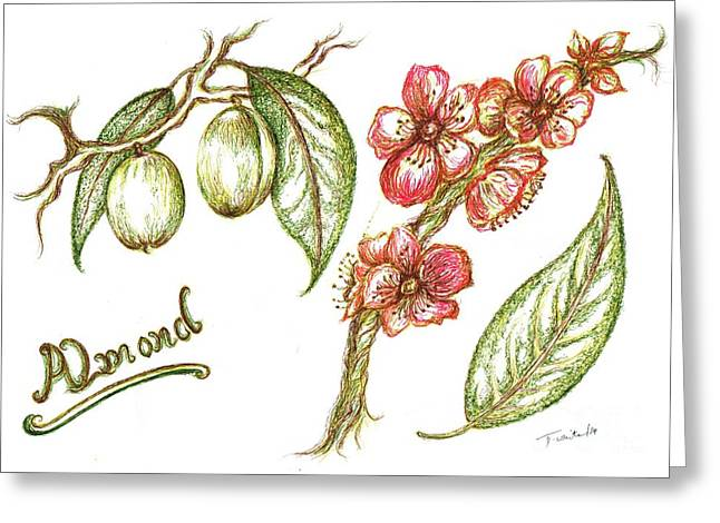 Shed Drawings Greeting Cards - Almond with flowers Greeting Card by Teresa White
