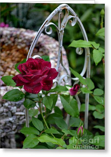 Eva Thomas Greeting Cards - Almost a Perfect Rose Greeting Card by Eva Thomas