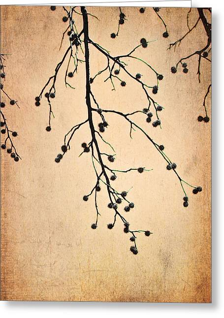 Etching Digital Greeting Cards - Almost Bare Branch Greeting Card by Suzanne Barber