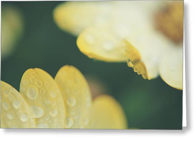 Dew Drop Greeting Cards - Almost Close Enough to Touch Greeting Card by Laurie Search