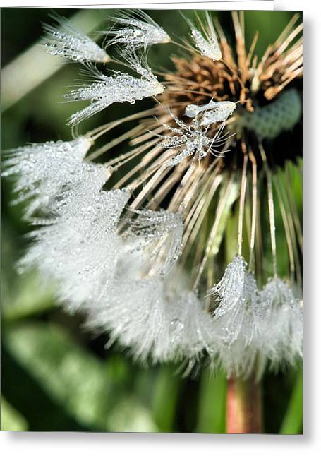 Dandilion Greeting Cards - Almost Gone Greeting Card by JC Findley