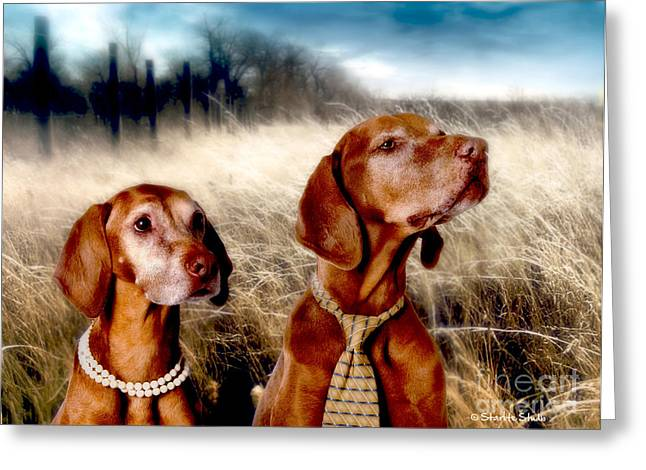 Hungarian Pointer Greeting Cards - Almost Home Greeting Card by Starlite Studio
