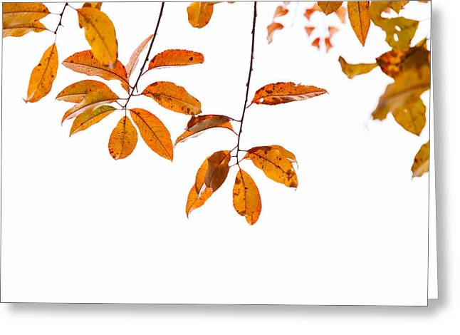 Colors Of Autumn Greeting Cards - Almost Time Greeting Card by Karol  Livote