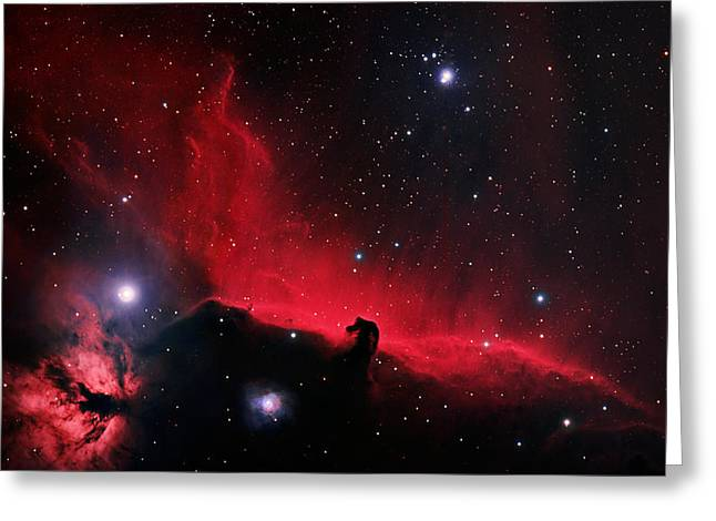 Horsehead Greeting Cards - Alnitak region in Orion Greeting Card by Celestial Images