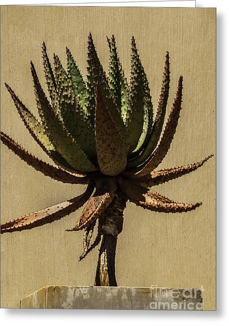 Power Plants Greeting Cards - Aloe Ferox Greeting Card by Daniela White
