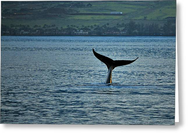 Save The Whales Greeting Cards - Aloha Greeting Card by Donna Shahan