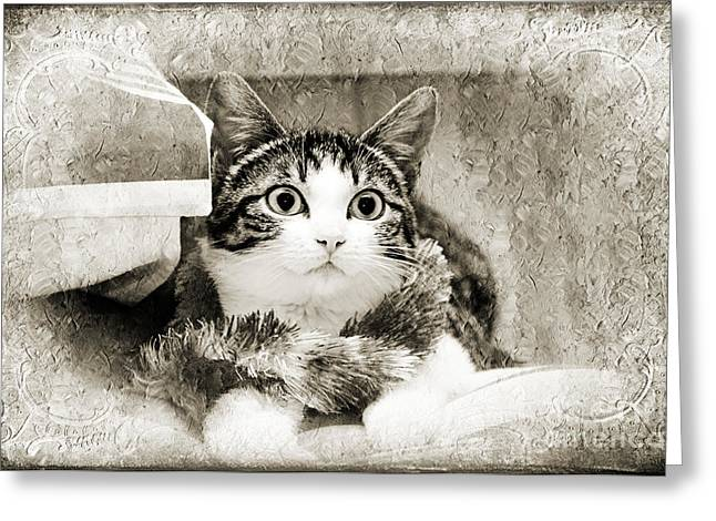 Kitten Mixed Media Greeting Cards - Aloha Kitty Painterly Greeting Card by Andee Design