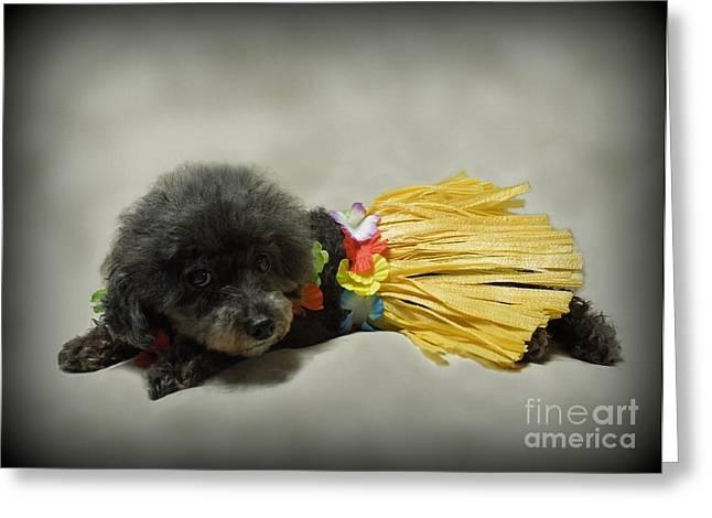 Hawaii Dog Photo Greeting Cards - Aloha Greeting Card by Renee Trenholm