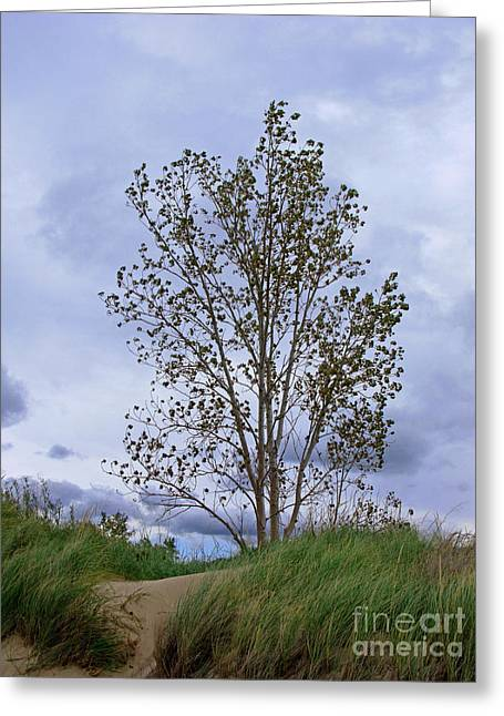 Indiana Dunes Greeting Cards - Alone Greeting Card by Ann Horn