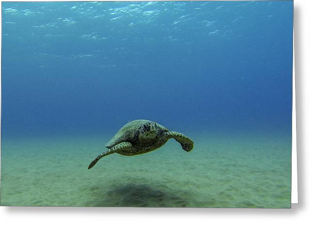 Green Sea Turtle Greeting Cards - Alone at Sea Greeting Card by Brad Scott