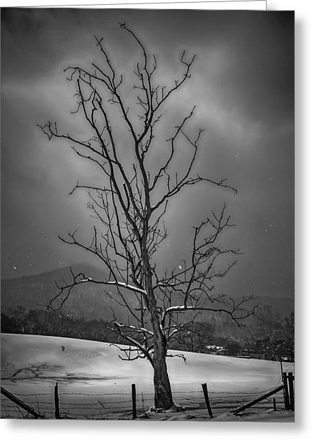 Blue Ridge Mountains Greeting Cards - Alone at the End of the Storm Greeting Card by John Haldane