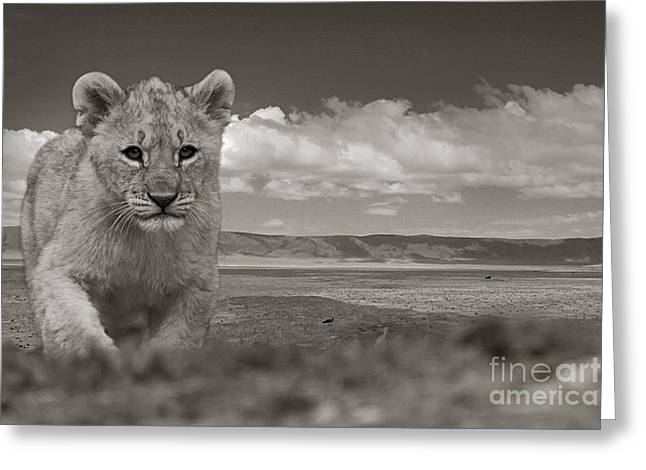 Tiere Greeting Cards - Alone... Greeting Card by Christine Sponchia