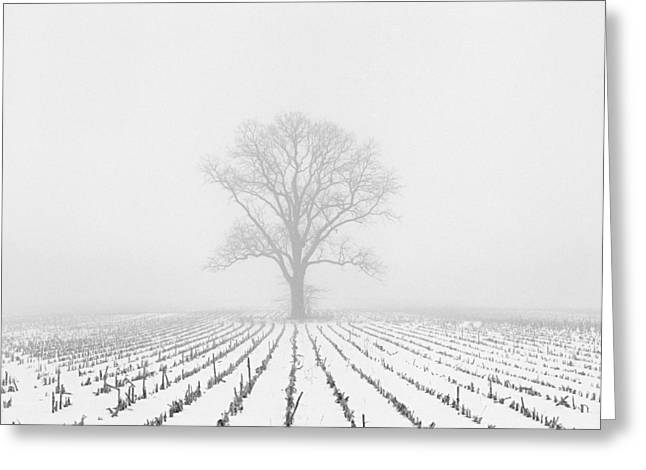 Rural Indiana Greeting Cards - Alone in the Cold #1 Greeting Card by Christopher Crawford